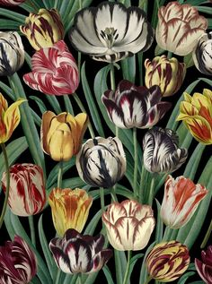 Beautiful tulip wallpaper by the design studio Mind The Gap. Shop online for the full range of Mind The gap Wallpaper at Lagoon. Graphic Wallpaper, Print Wallpaper, Dark Wallpaper, Pattern Wallpaper, Botanical Wallpaper, Beautiful Wallpaper, Mind The Gap, Dark Colors, Vivid Colors