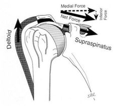 1shares 0 0 1 If there is one thing that I would say is the most important concept to understand regarding the shoulder, it is simply that you can not work the rotator cuff to failure as rotator cuff fatigue causes superior humeral head migration and subacromial impingement. That is it, I just summarized the …