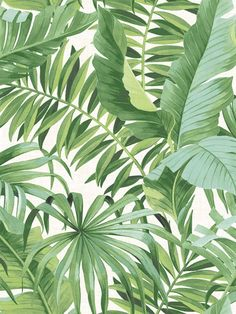 Transform your home into a vacation with tropical print wallpaper! Tropical wallpaper classically features palm trees, ocean and beach wildlife, and all the elements you might find on a dream vacation to the tropics. Tree Wallpaper White, Palm Leaf Wallpaper, Tropical Wallpaper, Print Wallpaper, Wallpaper Roll, Peel And Stick Wallpaper, Wallpaper Jungle, Botanical Wallpaper, Adhesive Wallpaper