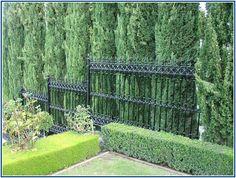 Corking Brick Privacy Fence