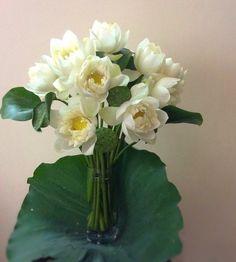 White lotus arrangement