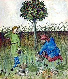 Harvesting garlic by Eve Fox, via Flickr