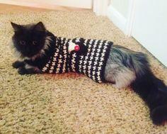 Crochet Parfait: Haute Puppy Coat, free pattern
