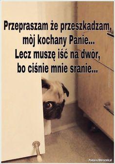 Przepraszam, że przeszkadzam... - #przepraszam #przeszkadzam #ze Polish Memes, Weekend Humor, Funny Mems, Cute Memes, Wtf Funny, Man Humor, Reaction Pictures, Funny Photos, I Laughed