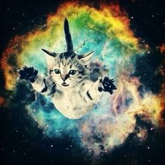Ofloral Galaxy Space Cat Mini Design Gaming Wall Art Hanging Tapestry, Bedroom Living Room Dorm Wall Hanging Tapestry, Multi >>> Continue to the product at the image link. (This is an affiliate link and I receive a commission for the sales) Space Cat, Space Odity, Cat Sushi, Crazy Cat Lady, Crazy Cats, Steam Punk, Llamas Animal, Animal Humor, Cute Cats