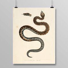 Reptile Print Vintage Snake Art Viper Wall Decor Lithograph 366