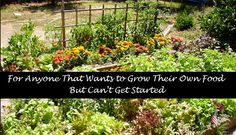 For Anyone That Wants to Grow Their Own Food But Can't Get Started - Check out our step by step directions to setting up a hassle free #survival garden