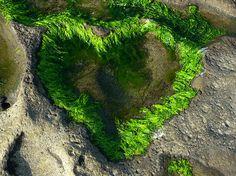 Heart of Nature, Art of Nature