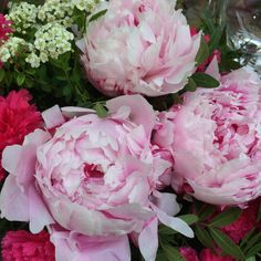 did you ask for peonies?