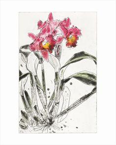 Orchid 1985 by Elizabeth Blackadder
