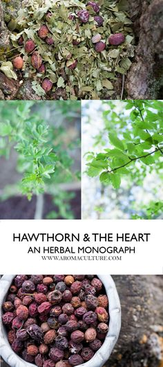22 Best Herbs For The Cardiovascular System Images On Pinterest