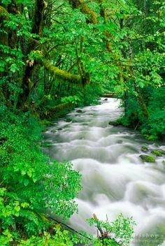 Cannings Creek, Quinault Rain Forest, Olympic National Park, Washington