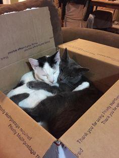 Cute kittens are fun