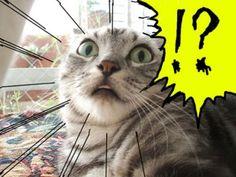 ?!?!?!???!?!?!??!?!?   twitpic.com/91l6p5