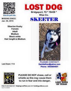 "#Lostdog 1-9-15 ""Skeeter"" #Bridgeport #TX #SiberianHusky F 940-389-4931 https://www.facebook.com/huskydogslostfound/posts/918133211551359"