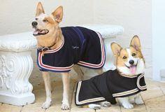 The Lexington Horse - Equine Couture Regatta Unifleece Dog Blanket, $24.95 (http://www.lexingtonhorse.com/equine-couture-regatta-unifleece-dog-blanket/)