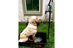 Outdoor Shower Ideas | Simple Outdoor Shower Ideas | HouseLogic (include a lower faucet or handheld for the dogs. dcm)