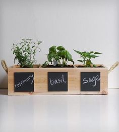 Indoor Herb Garden Kit | Home Kitchen | Meriwether of Montana | Scoutmob Shoppe | Product Detail