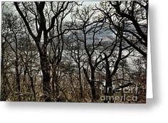 Loch Lomond Through The Birches Greeting Card by Joan-Violet Stretch