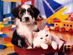 puppies and kittens | Puppies and kitten friends wallpaper