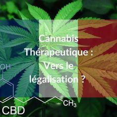 Cannabis thérapeutique : vers une Légalisation en France ? Plant Leaves, France, Plants, Anorexia, Insomnia, Sleep, Multiple Sclerosis, Flowers, Hemp Oil