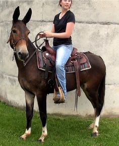 Gaited Mules For Sale @ Missouri Mule Company Pretty Horses, Beautiful Horses, Animals Beautiful, Large Animals, Cute Animals, Draft Mule, Mules Animal, Cowboy Horse, Pets For Sale