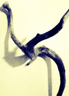 Silver Driftwood January 12, 2014