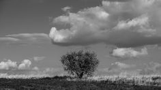 autumn day - bush in the steppe and clouds