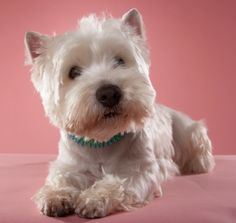 All About Dog Breeds - Profiles and Photo Galleries: Dog Breed Profiles-omg its Bup!