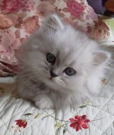 29 Kitten Pictures                                                                                                                                                                                 More