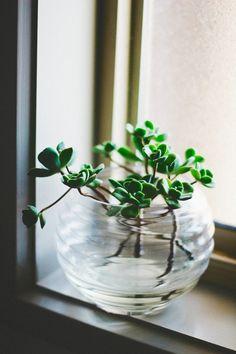 Glass Bowl of Succulents Succulent Arrangements, Cacti And Succulents, Indoor Garden, Indoor Plants, Stil Inspiration, Decoration Plante, Deco Nature, Plants Are Friends, Cactus Y Suculentas