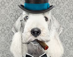 "Check out new work on my @Behance portfolio: ""Lord Bedlington"" http://be.net/gallery/61960683/Lord-Bedlington"
