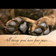 All things good have four paws