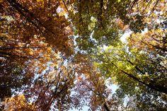 Картинки по запросу sun through branches