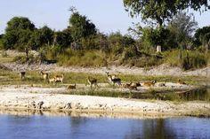 Botswana Reisebericht