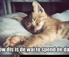 oh... getting sleepy now..... goodnite all furriends...