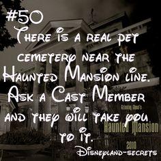 ideas for funny disney facts disneyland secrets Disneyland Secrets, Disney Secrets, Disney Tips, Disneyland Hacks, Disneyland Quotes, Funny Disney Facts, Disney Memes, Disney Quotes, Disney Trivia