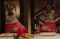 Visit site to see the funniest holiday video of this season!! You will want to watch it more than once! 13 Dogs & 1 Cat Holiday Feast. #Dogs #Cats #Holiday #Feast #FreshPet #Natural #PetFood