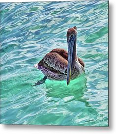 Metal Print by Tatiana Travelways, featuring a pelican floating in the clear turquoise Caribbean Sea in Cancun