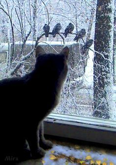 Animated Gif by Rosemary Cadena Animals And Pets, Funny Animals, Cute Animals, Crazy Cat Lady, Crazy Cats, Cat Window, Curious Cat, Cat Boarding, Cat Gif