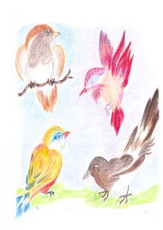 Oiseaux d'été : le trésor dans le tiroir