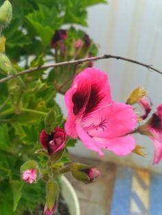 Beautiful double colour flower