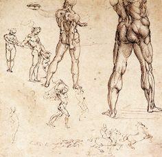 estudios anatómicos