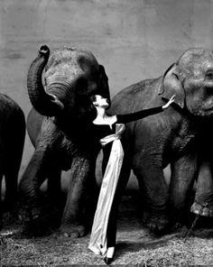 Dovima with Elephants, Dress by Dior, Cirque d'Hiver, Paris, August 1955   photo: © Avedon