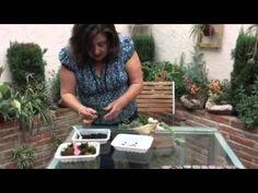 Cómo hacer un terrario con Happy Pot - YouTube