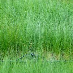 © LandAlab il Giardino dei Veli | Orticolario 2014 #ilgiardinodeiveli #orticolario2014 #anticipazioni #preview #giardinicreativi #giradinieri #gardeners #paologaruffa #andreacasarico #LandAlab