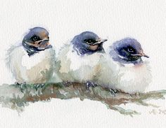 Swallows painting baby birds giclee print little swallows