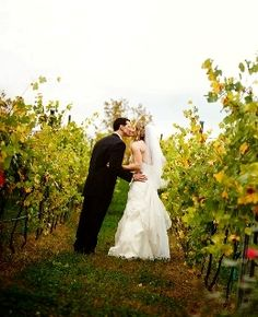 Bride and Groom in Vines at Potomac Point Winery