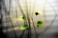 Image detail for -... ZEN Photography II Photograph - Harmony ZEN Photography II Fine Art