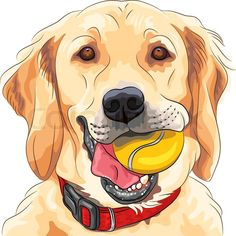 cartoon drawing of a golden retriever google search dog stuff in
